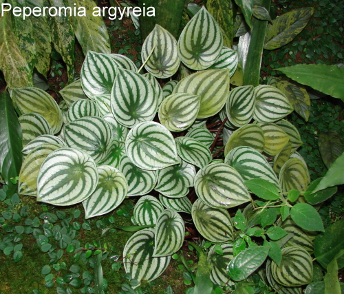 Комнатные растения без листьев